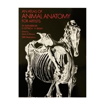 An Atlas Of Animal Anatomy For Artists Taxidermy Supply Finland