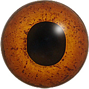 199FH 18 mm (brown hare)